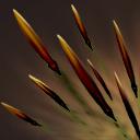 Quill_Spray_icon